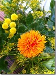 Blumen 2012-08-13 074