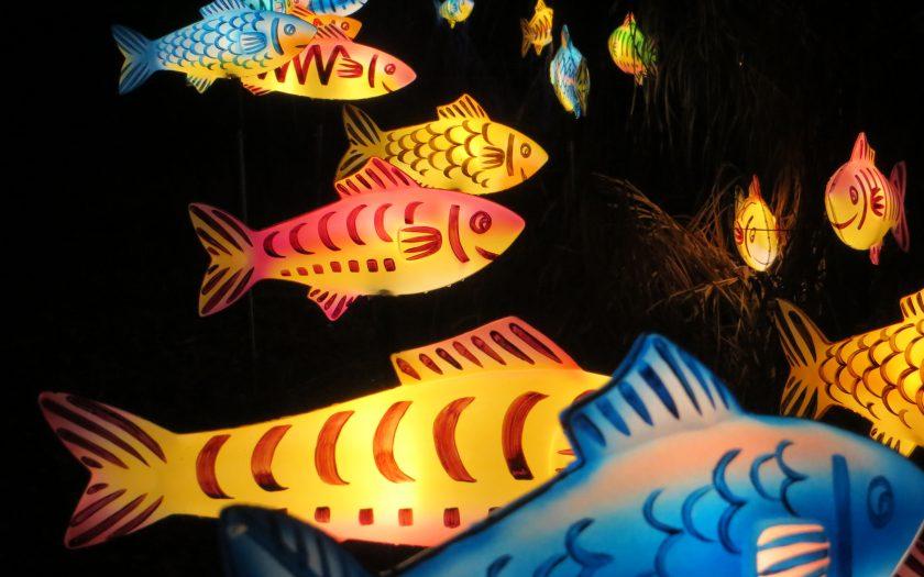 Fische | Foto: Martin Dubberke