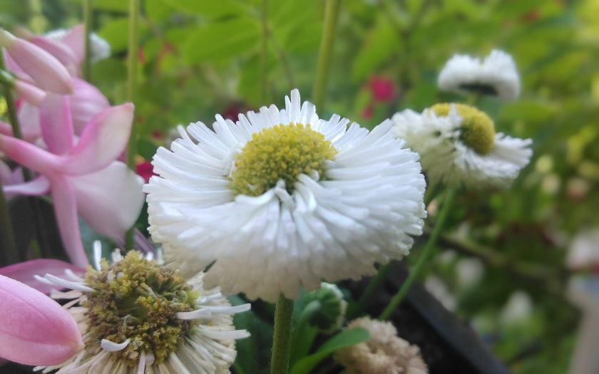 Blüten | Bild: Martin Dubberke