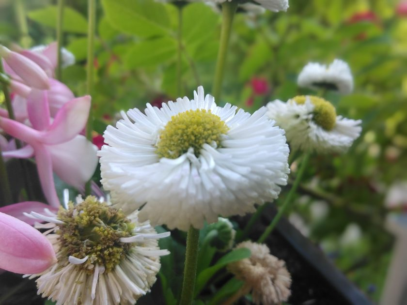 Blüten   Bild: Martin Dubberke
